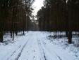 dukt leśny do źródełka